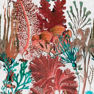 Coral Reef Set 3 role tapet, Netesut, Multicolor