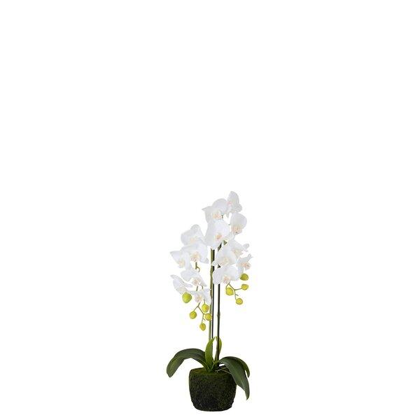 Orhidee Floare artificiala ghiveci, Plastic, Alb