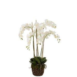 Ory Orhidee cu pamant, Plastic, Alb