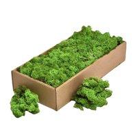 Licheni decorativi verzi